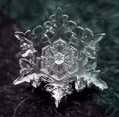 snowblack